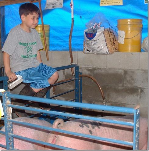 Fair Hog Show 001