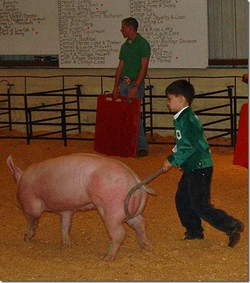 Fair Hog Show 048