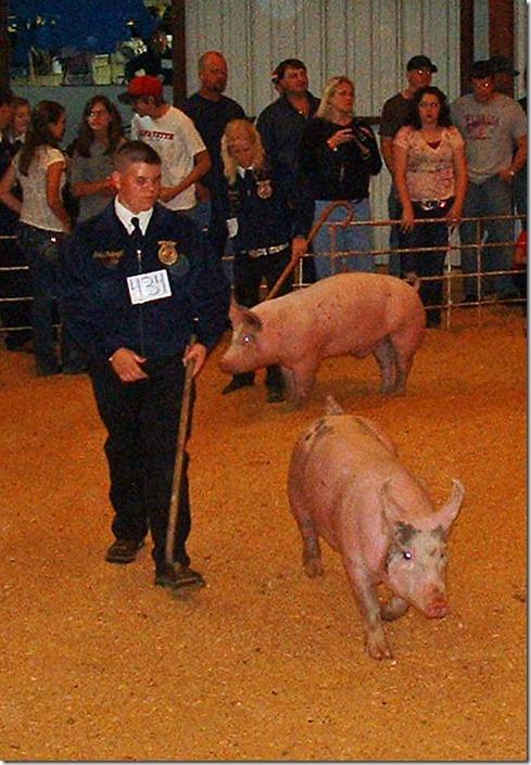 Fair Hog Show 060