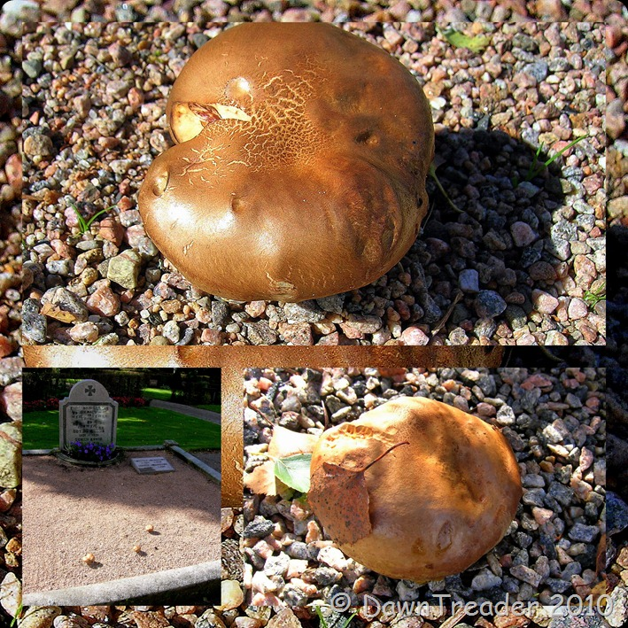 2010-09-19 mushrooms, autumn1