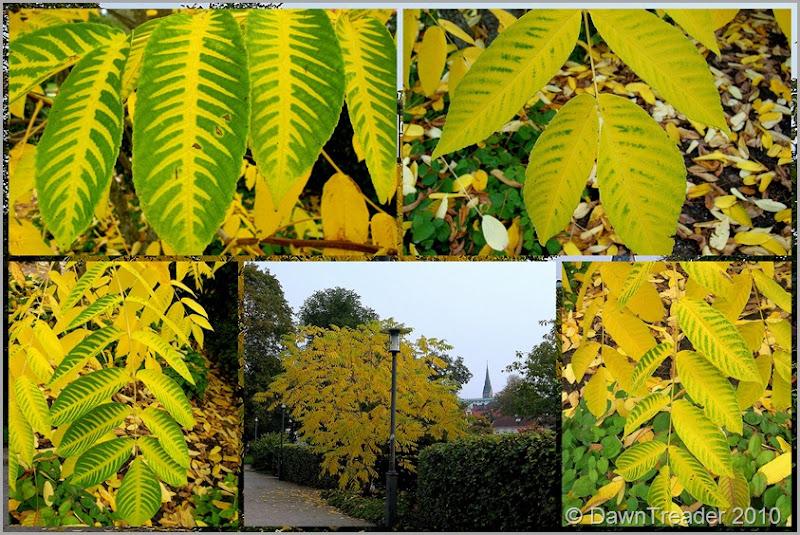2010-09-24 autumn, park1
