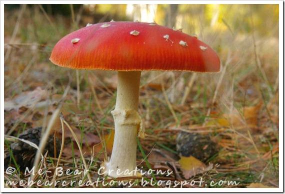 Mushroom_22