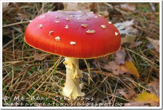 Mushroom_23