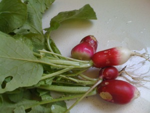 radishes