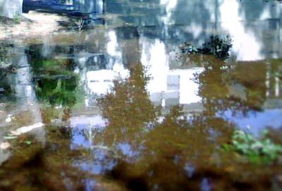 reflections: AWatson-Will