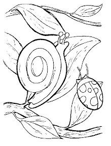 escargots_009.jpg