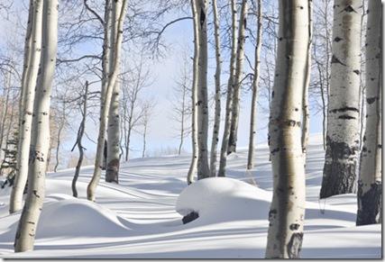 patrick_snow1_web