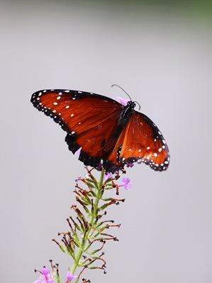 sad little butterfly