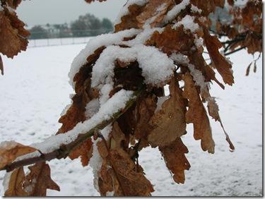 snow 068