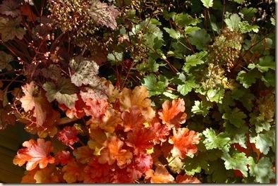ashington gardens 004