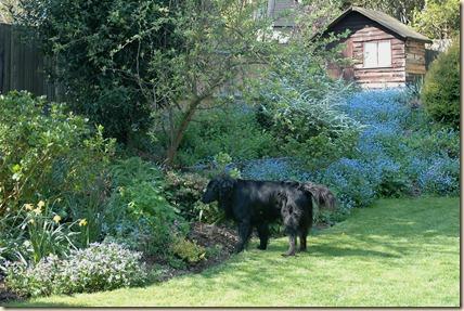 garden 039