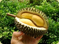 Durian%20Fruit