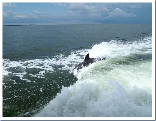 Tarpon Springs dolfijn3