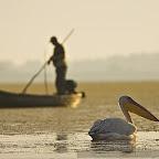 Boats by Daniel Petrescu