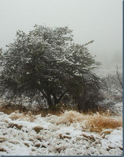 Fog&Snow 371x480