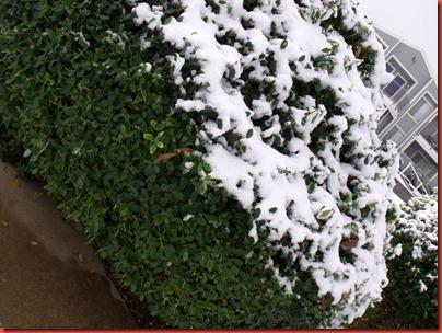 snowwknd 031