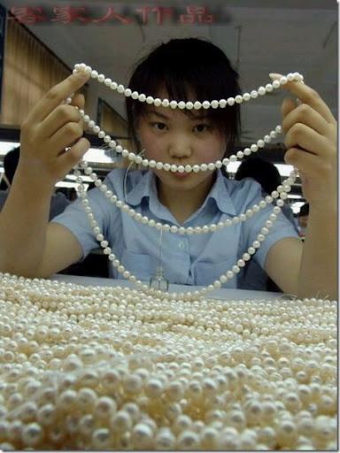 pearl_harvesting10