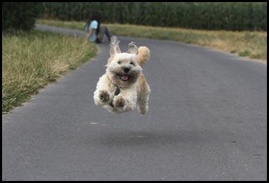 flying doggie