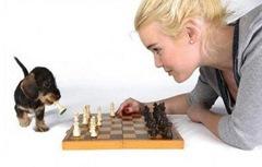 loira-burra-jogando-xadrez