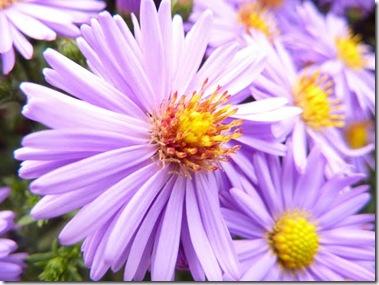 P1000852lovelyflowers