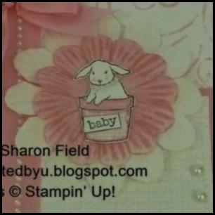CS25_SharonFieldthebunny
