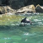 Seehunde am spielen (keine 2m von uns entfernt...)