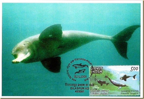 Max. Card-Ganges River Dolphin