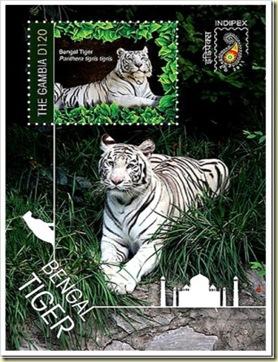gambia bengal tiger