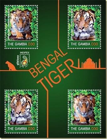gambia bengal tiger2
