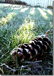 pinecone35x7 watermark