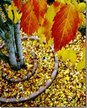 autumn watermark