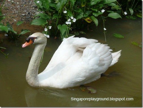 sbg swan