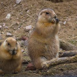 by Darrell Raw - Animals Other Mammals