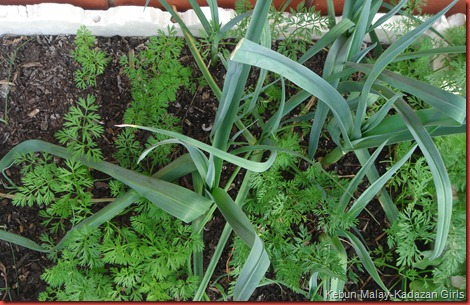 container gardening (12)