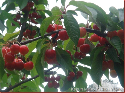 Cherry Picking (89)