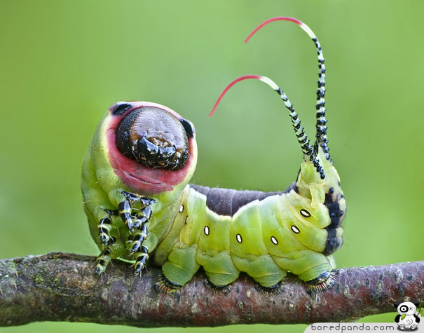 Caterpillars That Sting http://www.boredpanda.com/22-weird-and-beautiful-caterpillars/