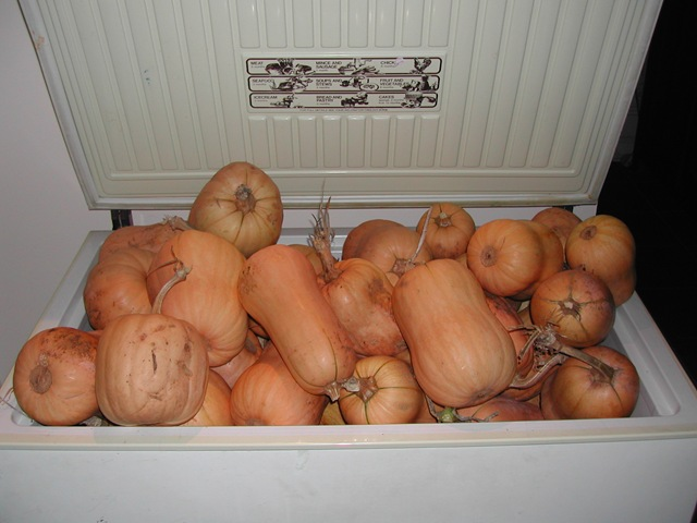Pumpkins stored in an old chest freezer
