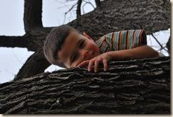 E on the tree