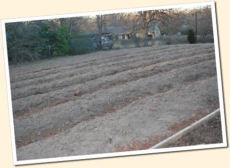 50 x 60 ft garden