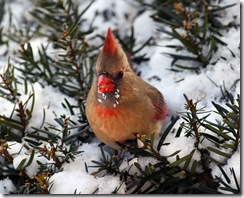 cardinal f2