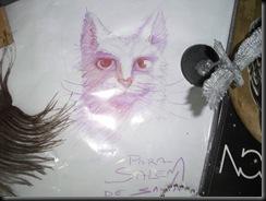gato de Salva para Salem :)