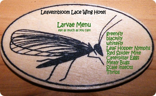 lacewing Larvae Menu