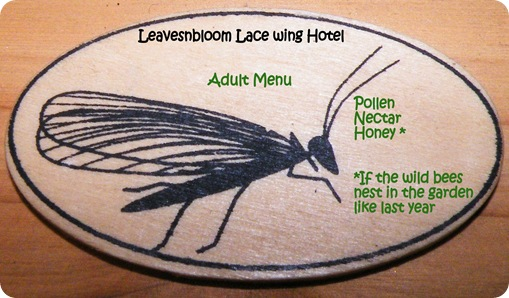 lacewing adult menu