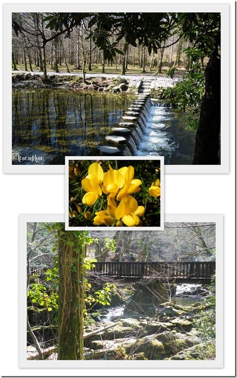 Tollymore Shimna River Narnia 2