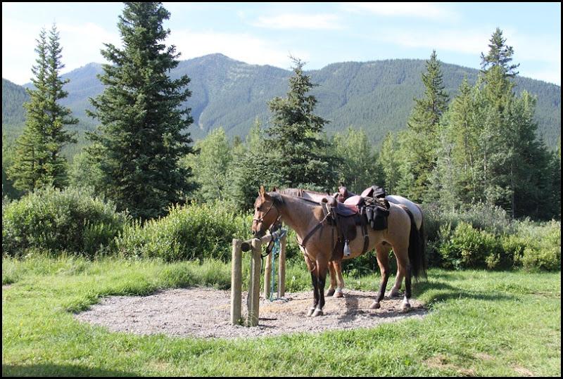 Etherington Horses-1