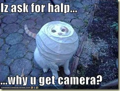 funny-pictures-cat-is-asking-for-help-so-why-are-you-taking-photos