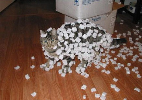 [packing-peanuts-stuck-to-cat[11].jpg]