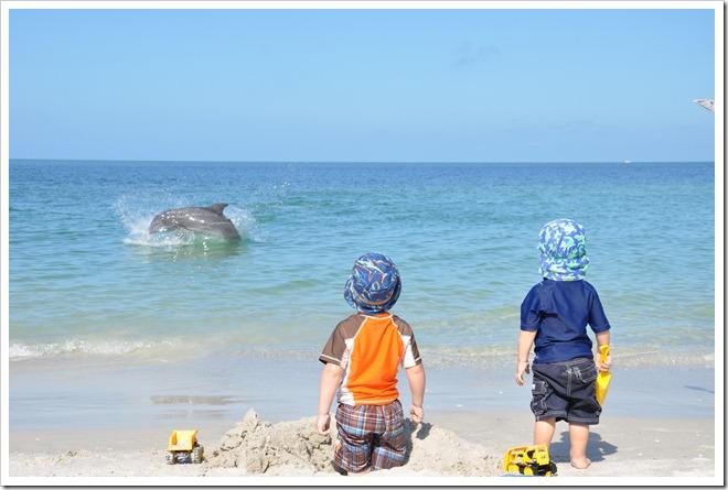 Dolphin's in Naples