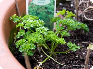 17-03-parsley