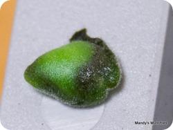 21-03 sage leaf